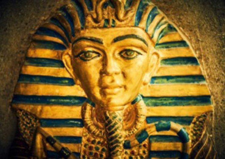Стая Египет Галерия 1
