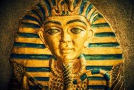 Стая Египет галерия на начална страница снимка  1